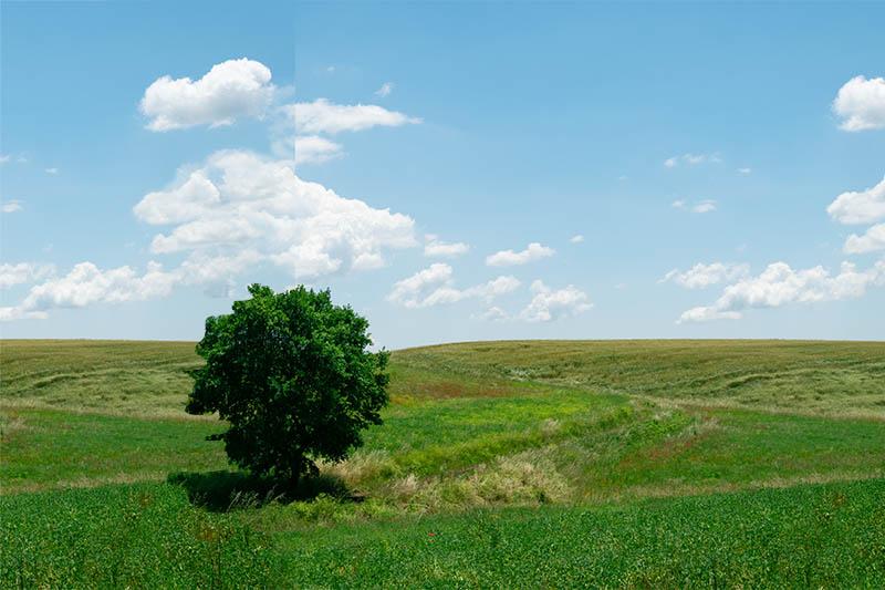 Paesaggio naturale e albero in primo piano